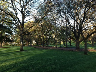 Rosalind Park Pine Lawn