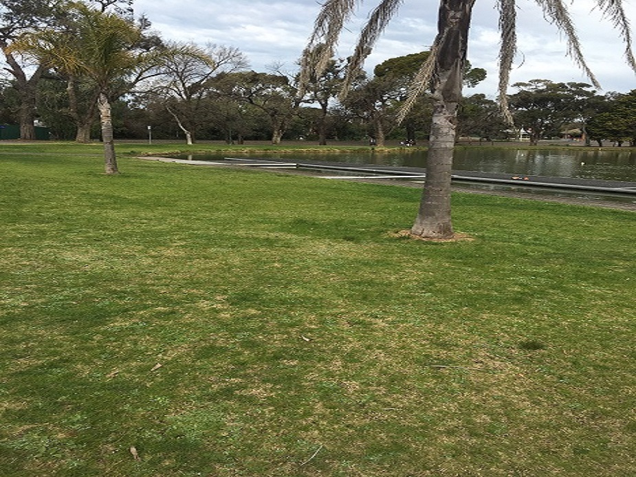 Rowing Precinct Lawns