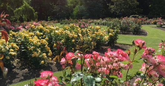 Pollard Park Rose Garden