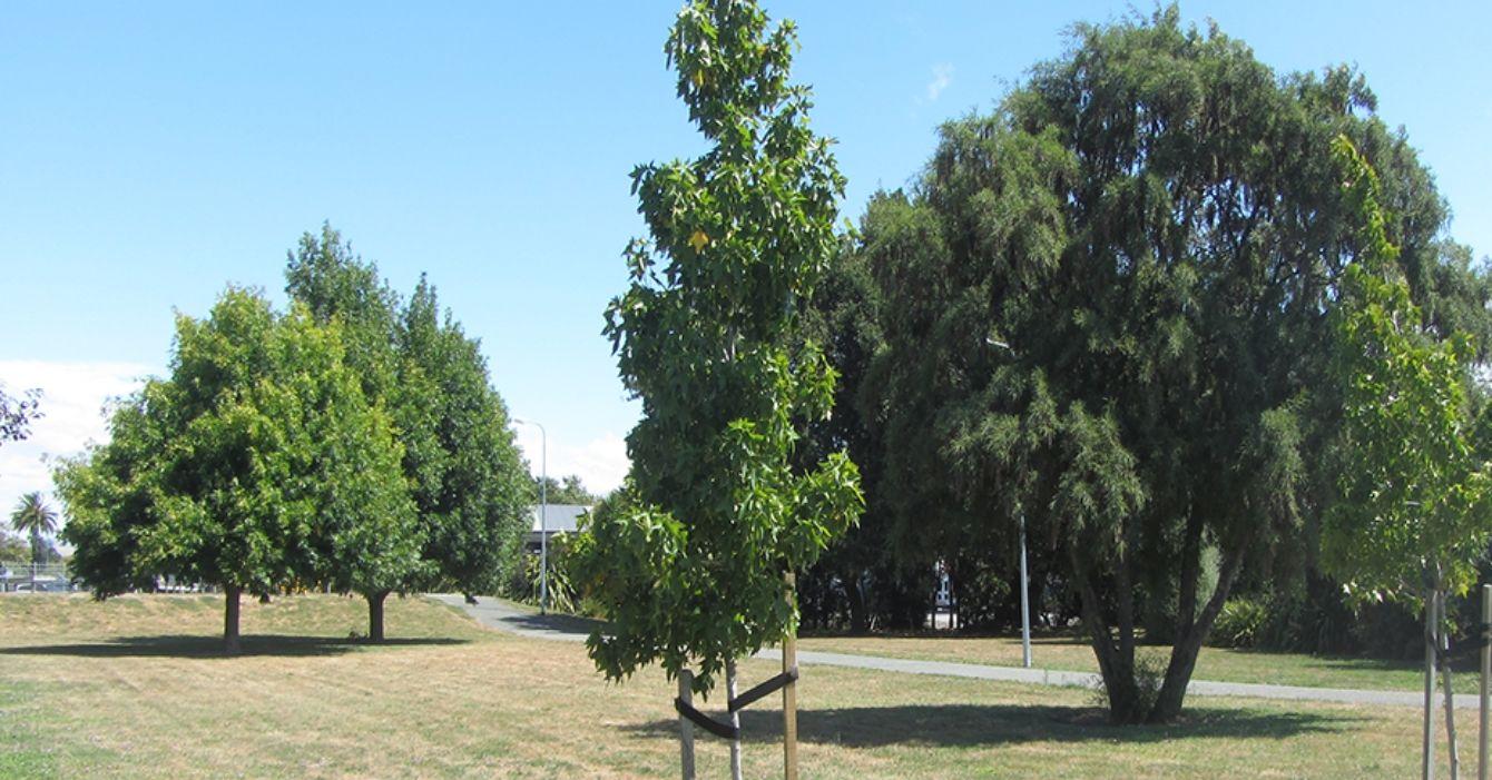 Snowden Crescent Reserve