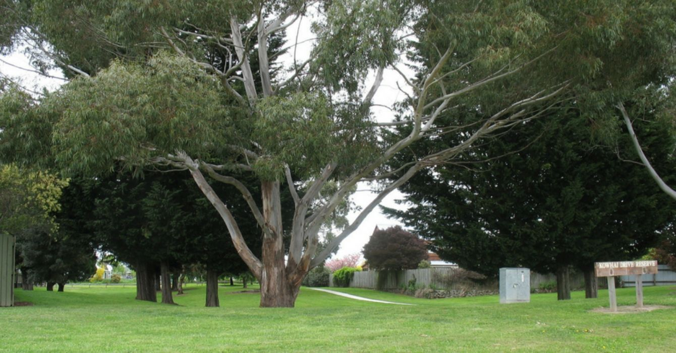 Kowhai Drive Reserve