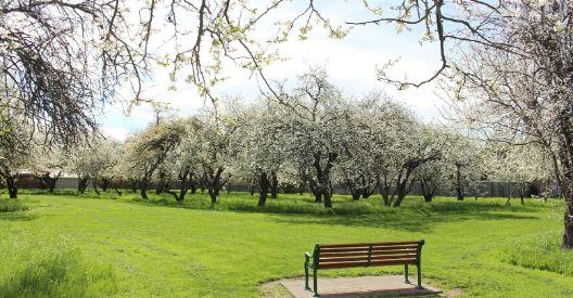 McKendry Park Reserve