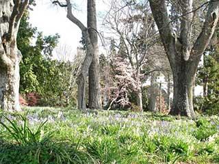 Isel Park